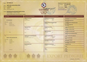 Beni's export Pedigree